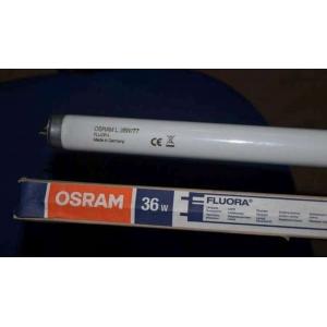 OSRAM L 36W/77 FLUORA T8 bitkiler ve akvaryumlar için